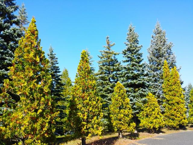 クリスマスツリー飾り付けのコツは?順番とポイントを踏まえて紹介!